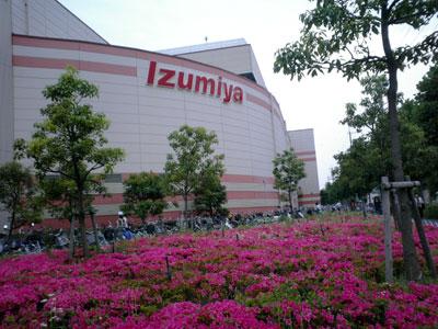 060604_izumiya1.jpg