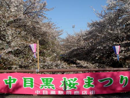 070405_megurogawa2.jpg