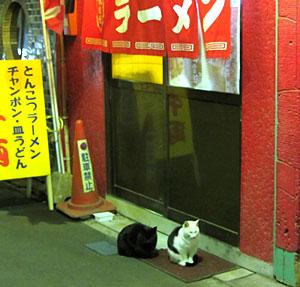 131212_伊勢駅前商店街・猫