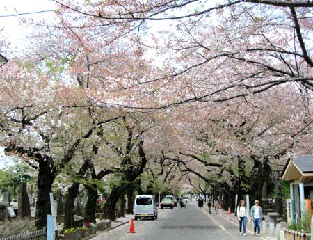 140409_谷中霊園